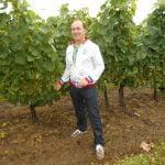 In de wijngaard Cote de Couchois